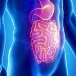 область кишечника