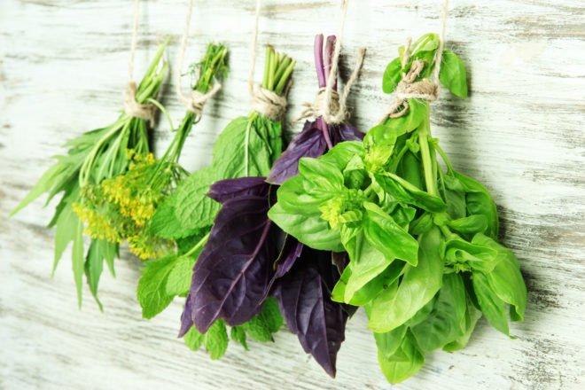 лечебные травы для лечения дисбактериоза