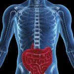 кишечник в организме человека