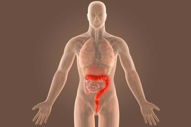 Строение кишечника